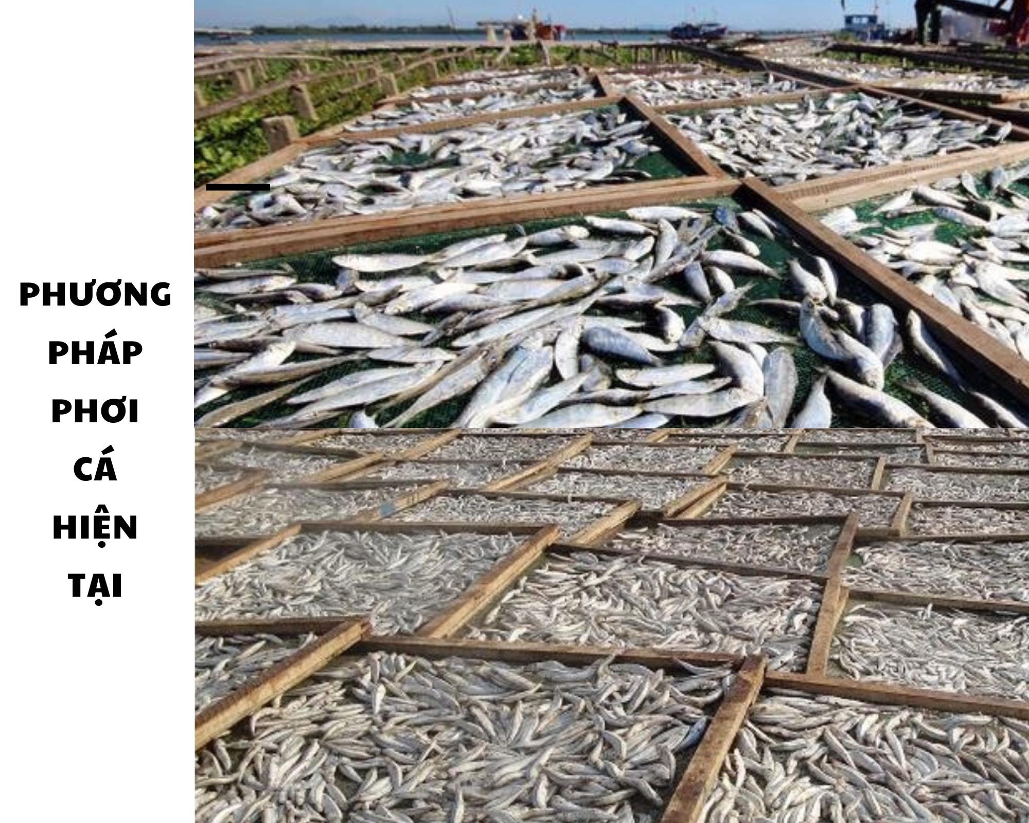 Phương pháp phơi sấy cá khô hiện tại.