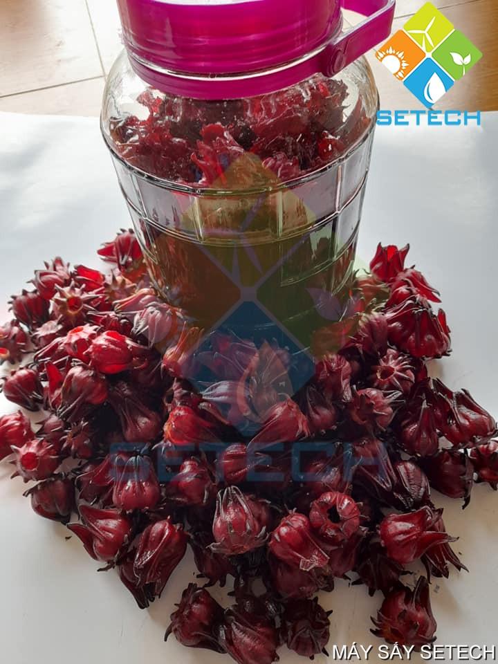 Rượu hoa Atiso đỏ